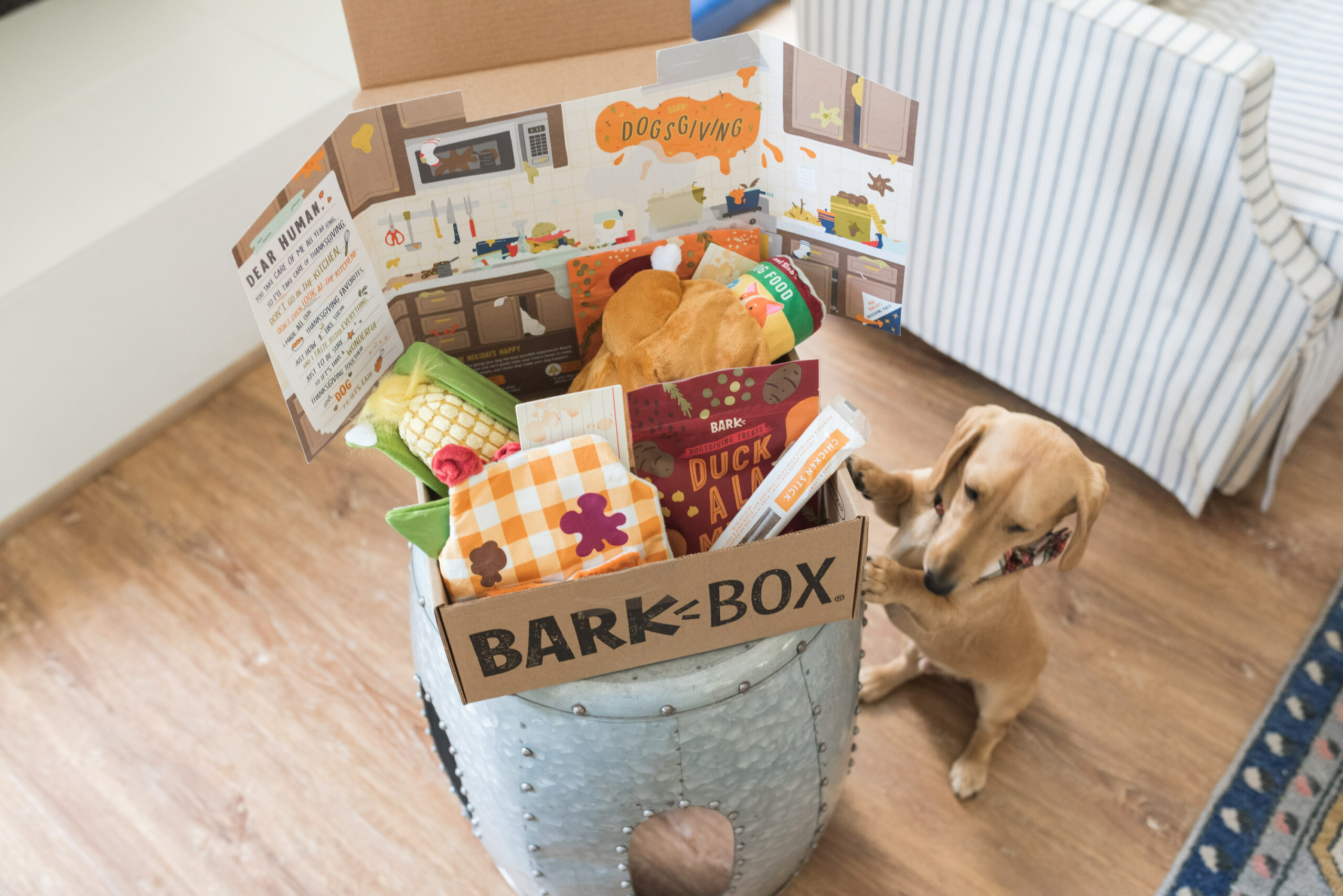 Barkbox Toys by popular Houston lifestyle blog, Fancy Ashley: image of a dog standing next to a Barkbox filled with dog toys and treats.