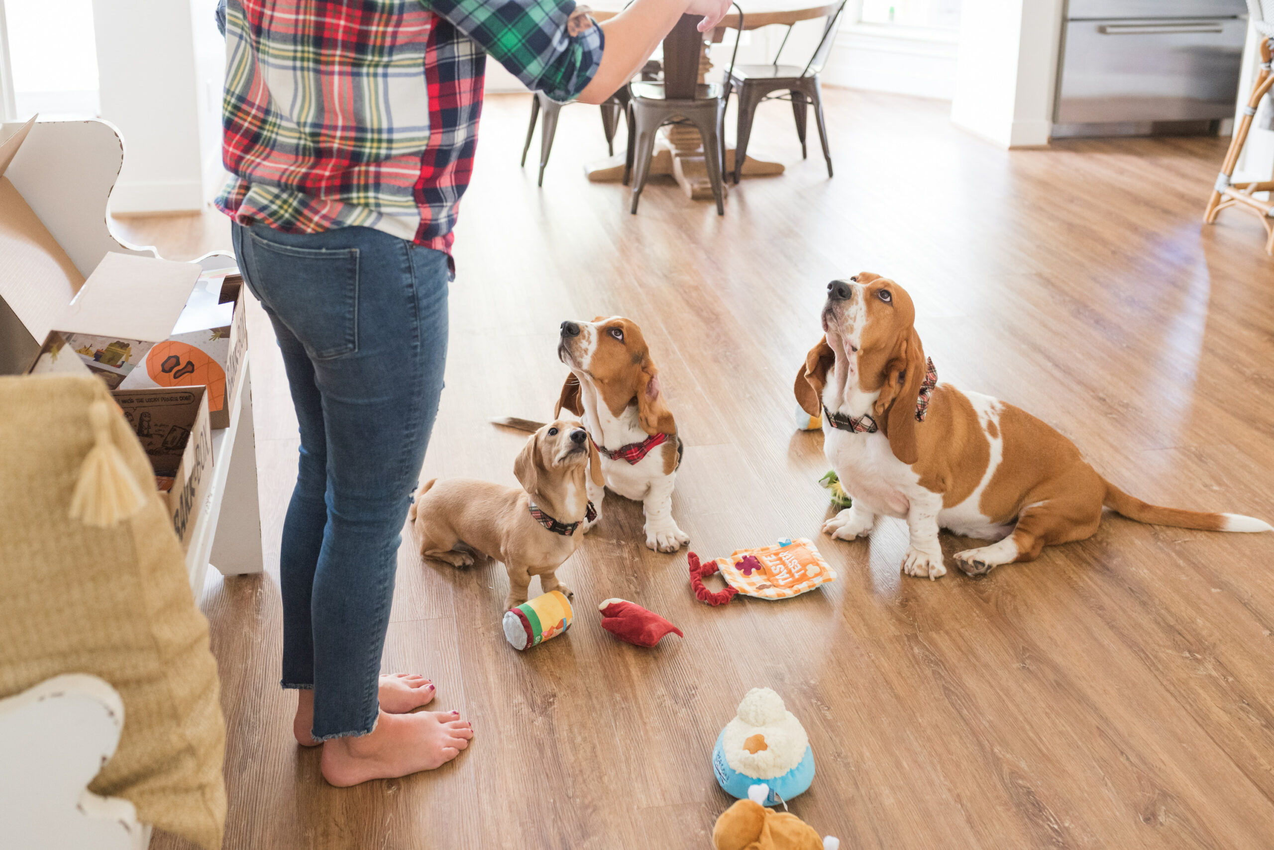 Barkbox Toys by popular Houston lifestyle blog, Fancy Ashley: image of a woman having her dogs do some tricks.